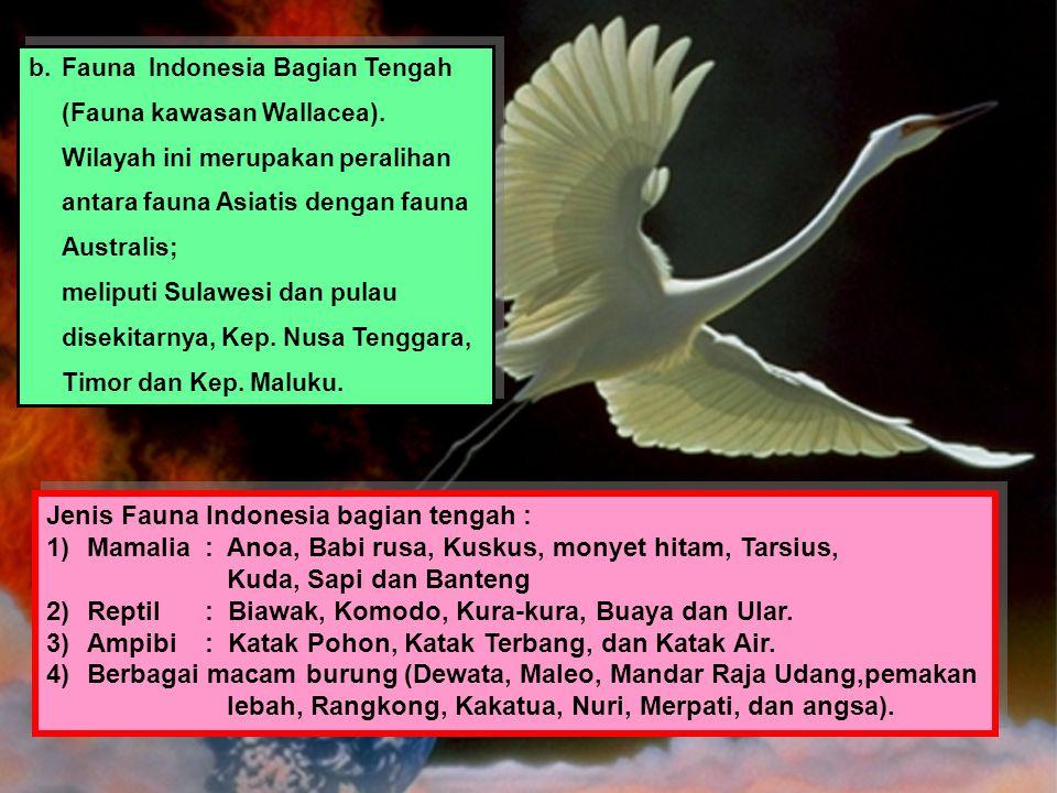Jenis Fauna Indonesia bagian tengah :