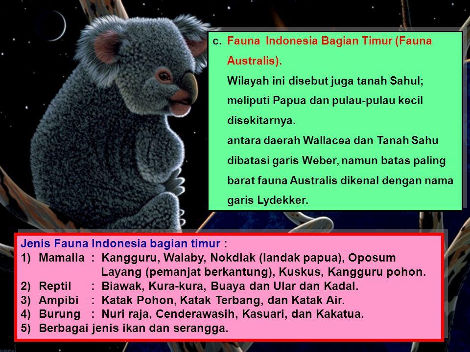 Jenis Fauna Indonesia bagian timur :