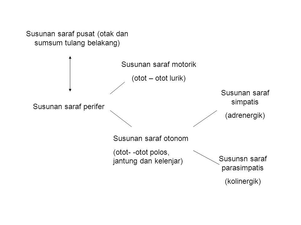 Susunan saraf pusat (otak dan sumsum tulang belakang)