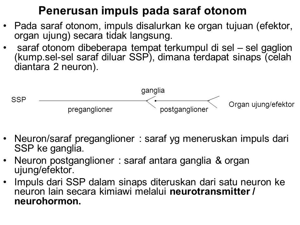 Penerusan impuls pada saraf otonom