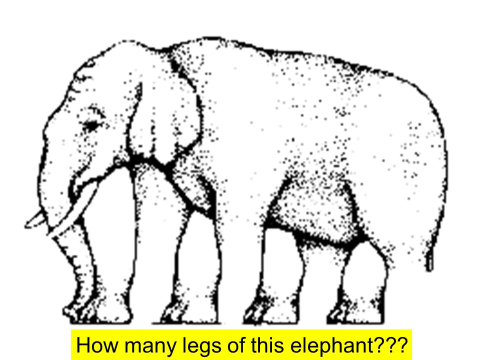 How many legs of this elephant