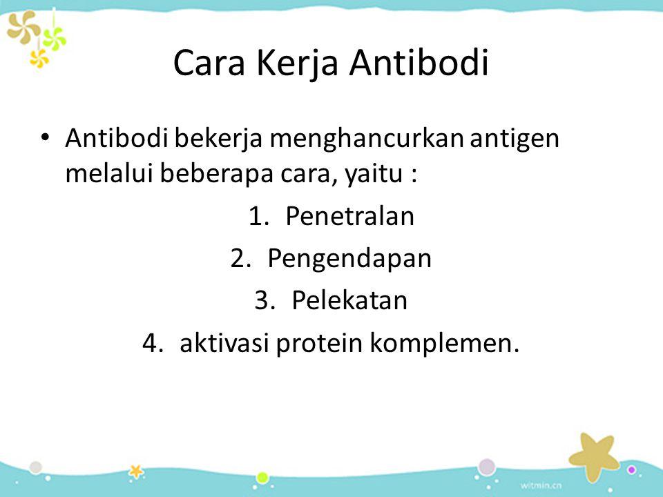 aktivasi protein komplemen.