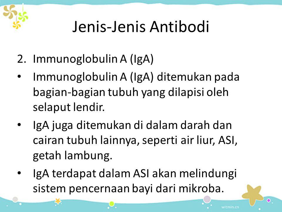 Jenis-Jenis Antibodi Immunoglobulin A (IgA)