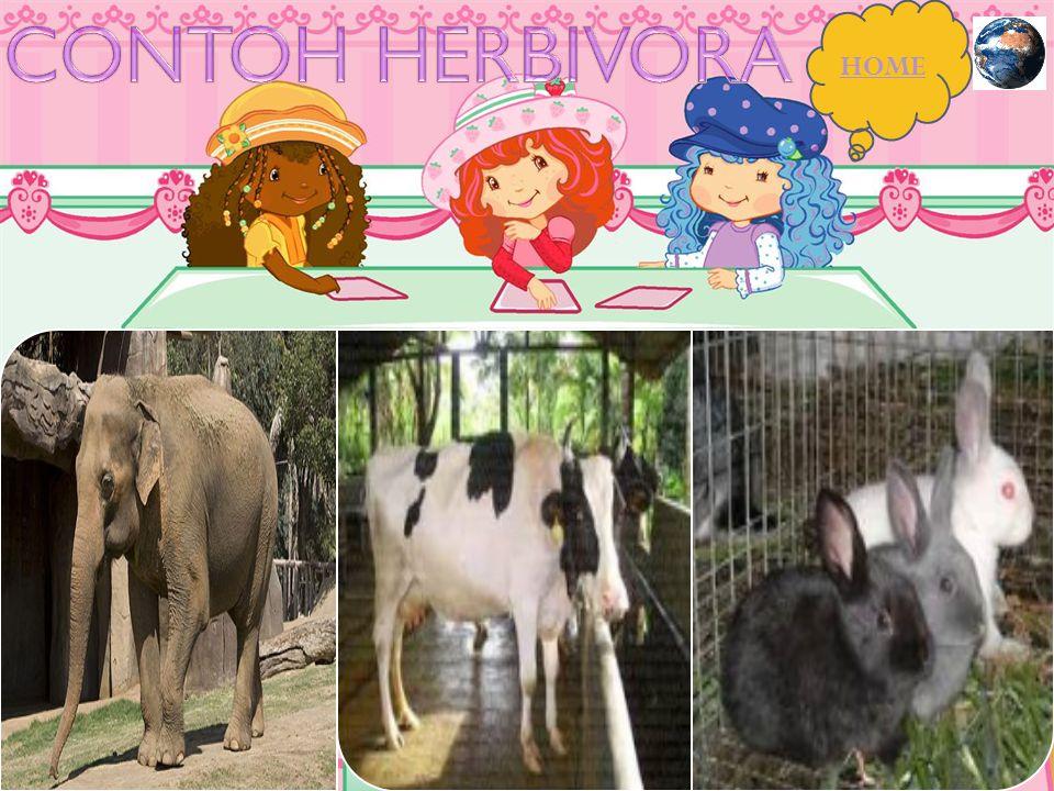 CONTOH HERBIVORA HOME
