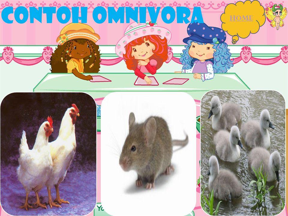 CONTOH OMNIVORA HOME