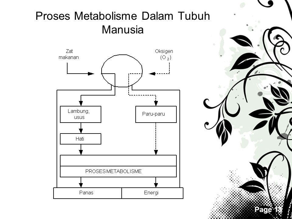 Proses Metabolisme Dalam Tubuh Manusia