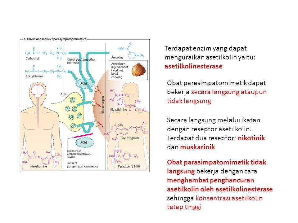 Terdapat enzim yang dapat menguraikan asetilkolin yaitu: asetilkolinesterase