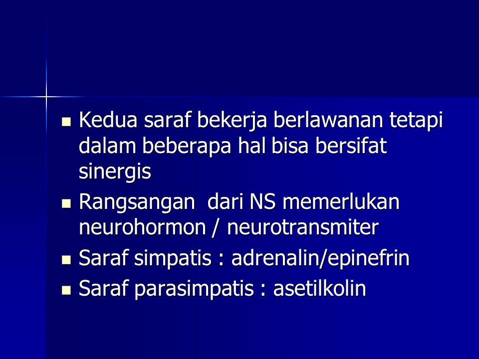 Kedua saraf bekerja berlawanan tetapi dalam beberapa hal bisa bersifat sinergis
