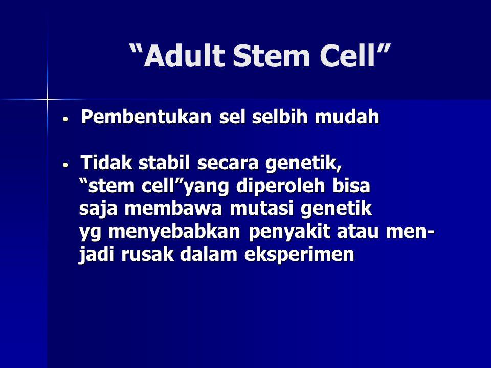 Adult Stem Cell Pembentukan sel selbih mudah