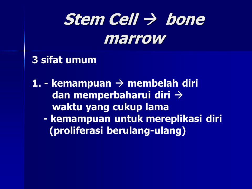 Stem Cell  bone marrow 3 sifat umum 1. - kemampuan  membelah diri