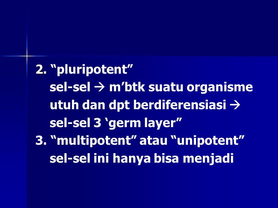 2. pluripotent sel-sel  m'btk suatu organisme. utuh dan dpt berdiferensiasi  sel-sel 3 'germ layer