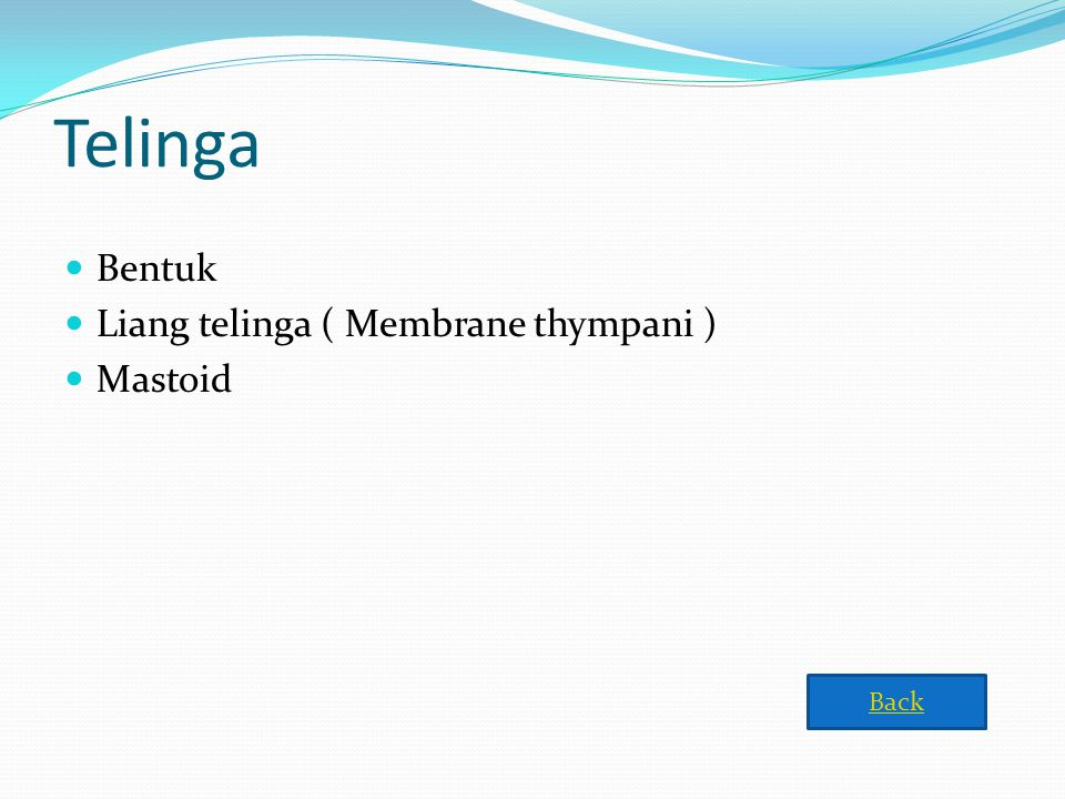 Telinga Bentuk Liang telinga ( Membrane thympani ) Mastoid Back