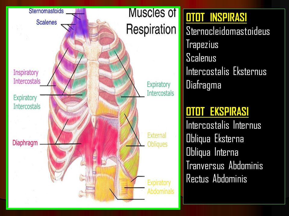 OTOT INSPIRASI Sternocleidomastoideus. Trapezius. Scalenus. Intercostalis Eksternus. Diafragma.