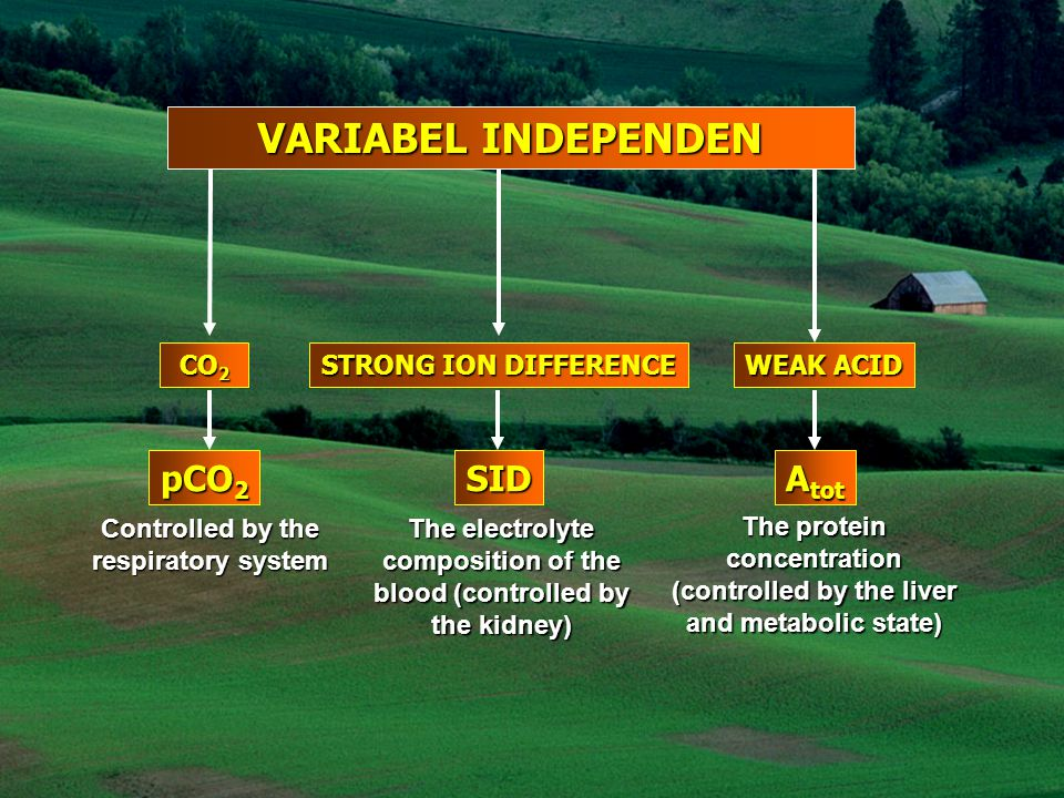 VARIABEL INDEPENDEN pCO2 SID Atot CO2 STRONG ION DIFFERENCE WEAK ACID