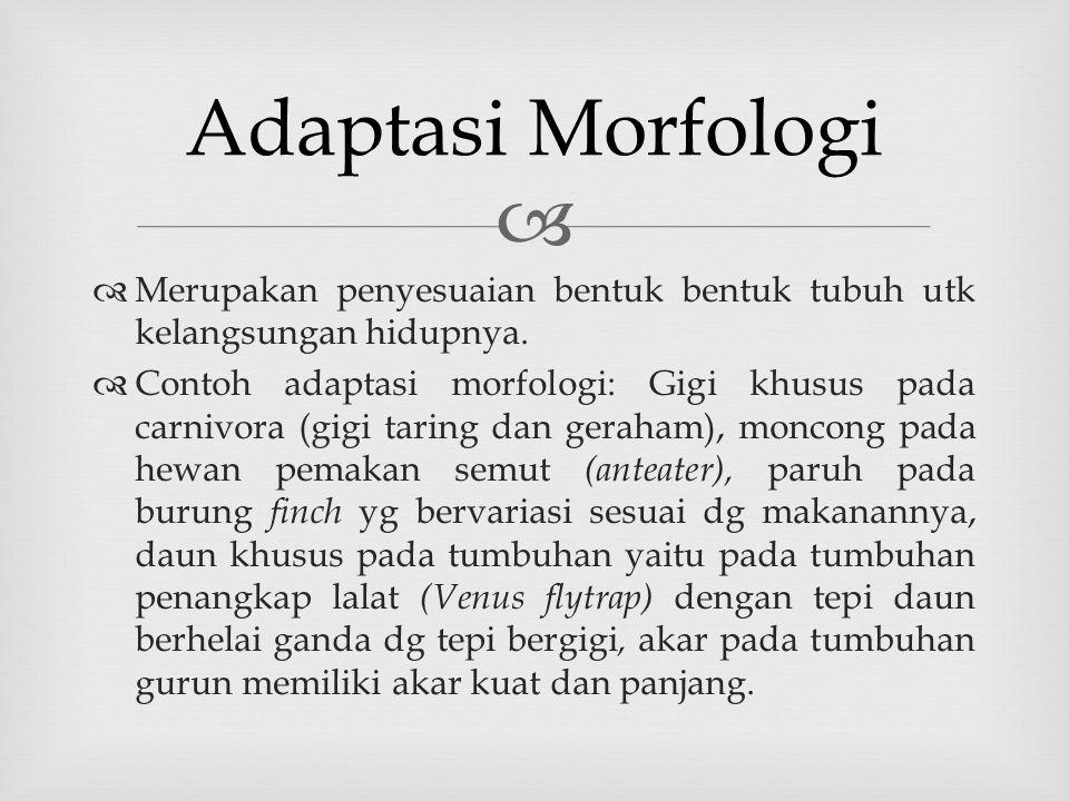 Adaptasi Morfologi Merupakan penyesuaian bentuk bentuk tubuh utk kelangsungan hidupnya.