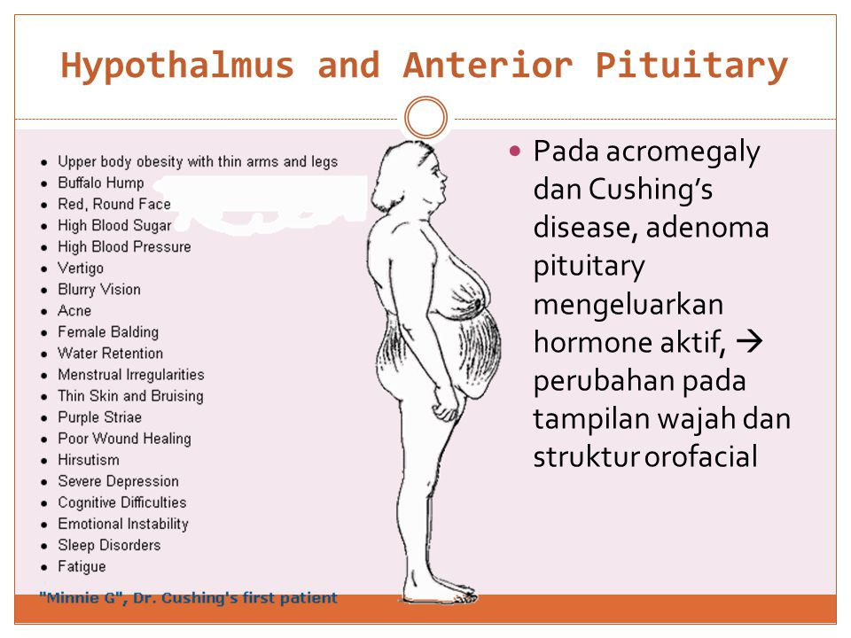 Hypothalmus and Anterior Pituitary