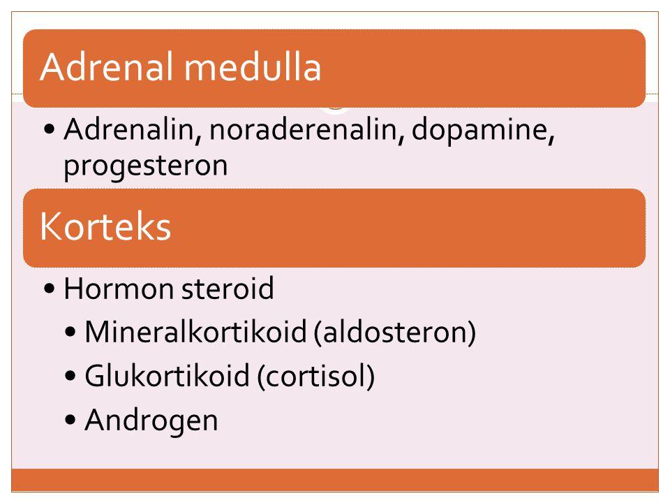 Adrenal medulla Adrenalin, noraderenalin, dopamine, progesteron. Korteks. Hormon steroid. Mineralkortikoid (aldosteron)