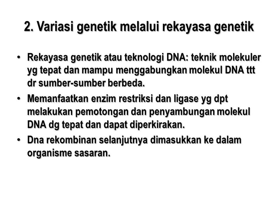 2. Variasi genetik melalui rekayasa genetik