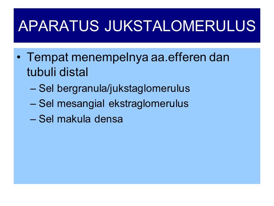 APARATUS JUKSTALOMERULUS
