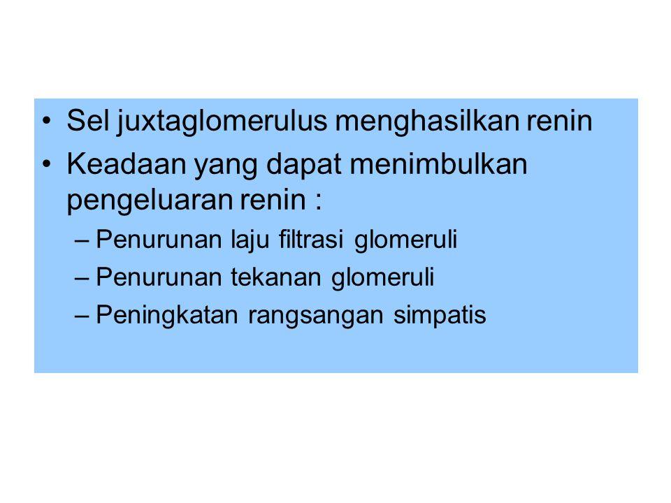 Sel juxtaglomerulus menghasilkan renin