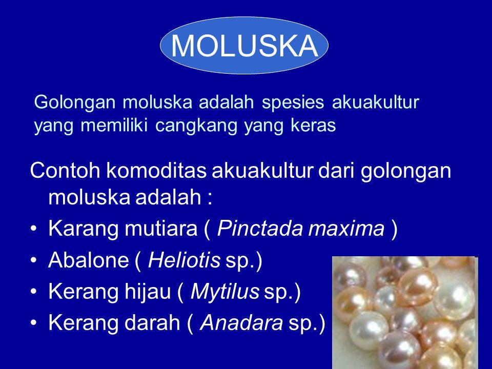 MOLUSKA Contoh komoditas akuakultur dari golongan moluska adalah :