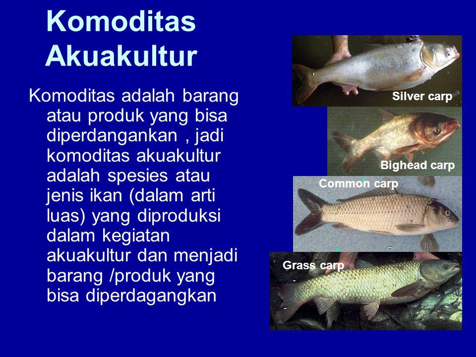 Komoditas Akuakultur Grass carp. Common carp. Bighead carp. Silver carp.