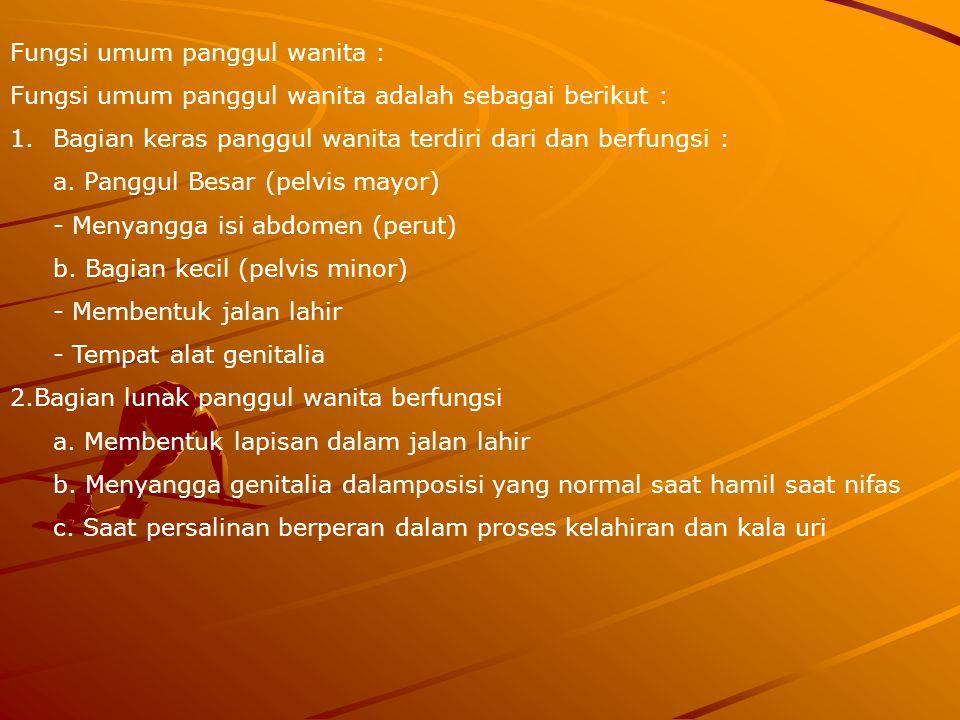 Fungsi umum panggul wanita :