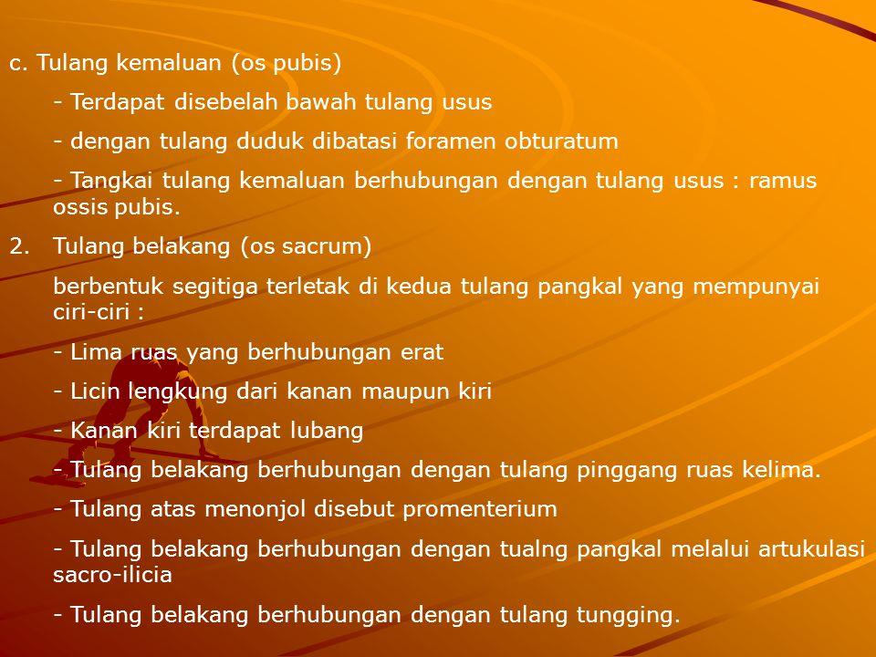 c. Tulang kemaluan (os pubis)
