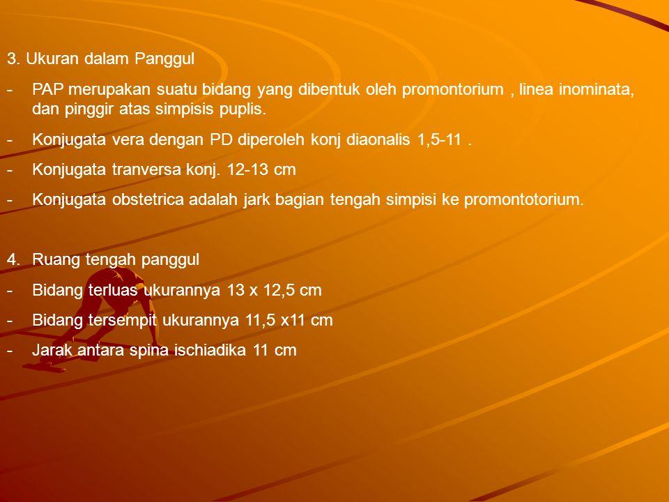 3. Ukuran dalam Panggul PAP merupakan suatu bidang yang dibentuk oleh promontorium , linea inominata, dan pinggir atas simpisis puplis.