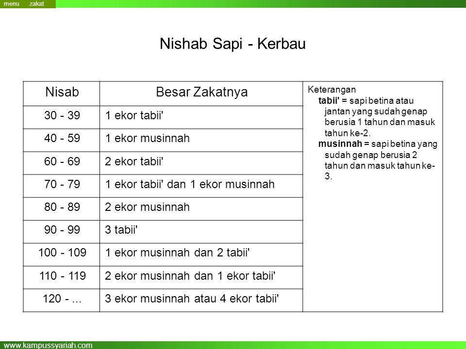 Nishab Sapi - Kerbau Besar Zakatnya Nisab 1 ekor tabii 30 - 39