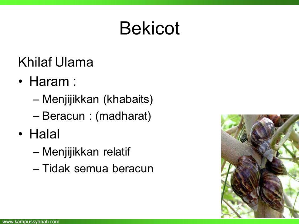 Bekicot Khilaf Ulama Haram : Halal Menjijikkan (khabaits)