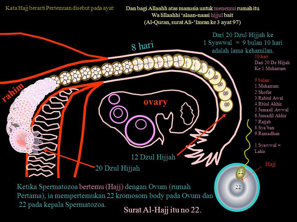 8 hari rahim ovary Surat Al-Hajj itu no 22. 12 Dzul Hijjah