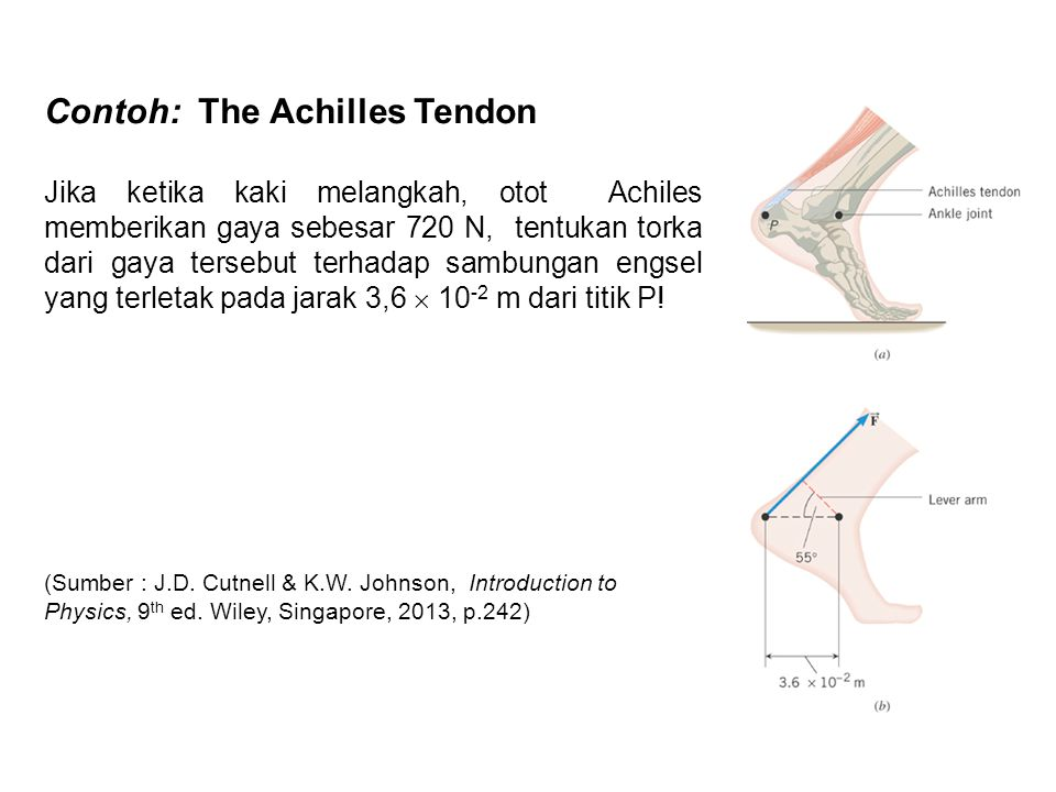 Contoh: The Achilles Tendon