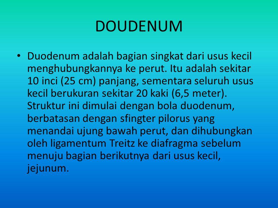 DOUDENUM