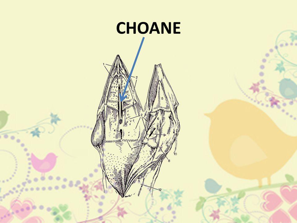 CHOANE