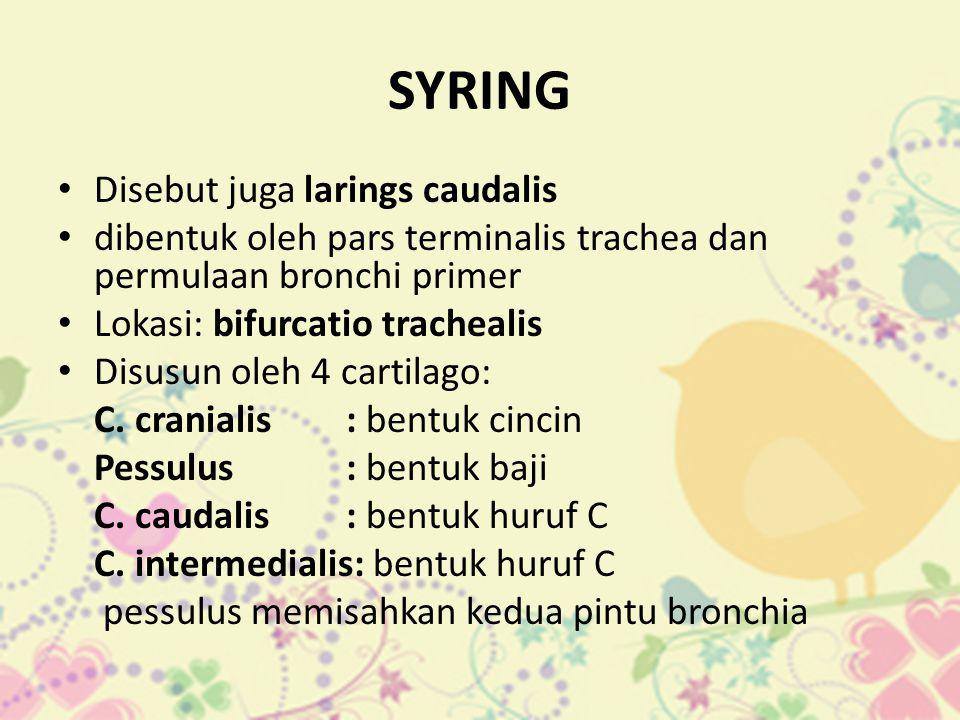 SYRING Disebut juga larings caudalis