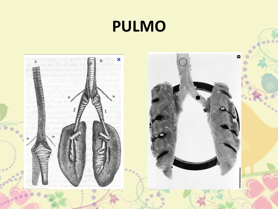 PULMO
