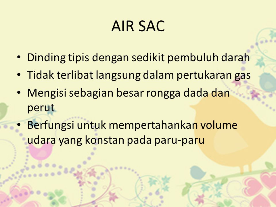 AIR SAC Dinding tipis dengan sedikit pembuluh darah