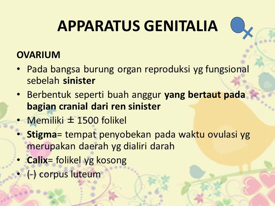 APPARATUS GENITALIA OVARIUM