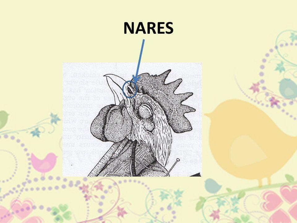 NARES