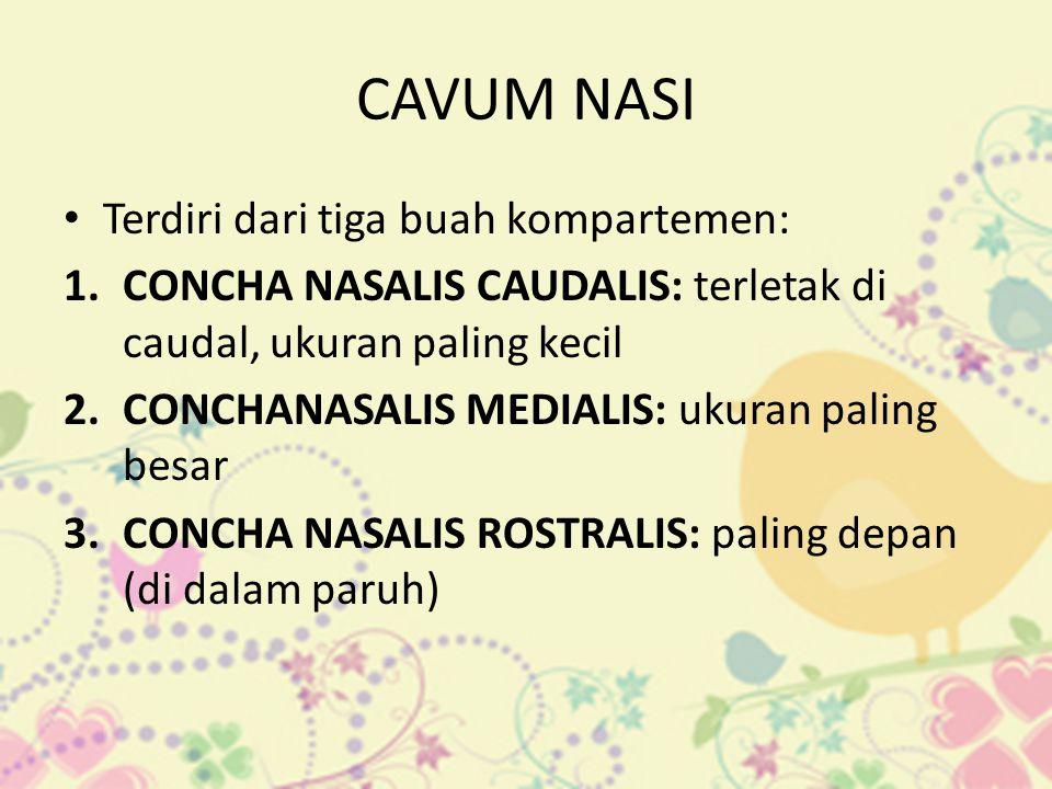 CAVUM NASI Terdiri dari tiga buah kompartemen: