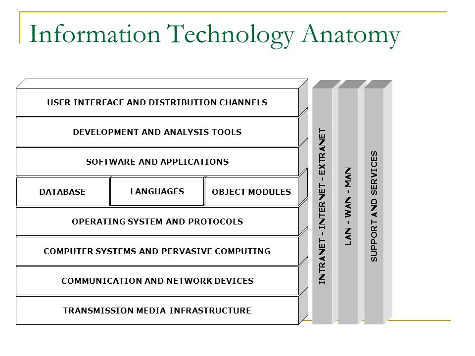 Information Technology Anatomy