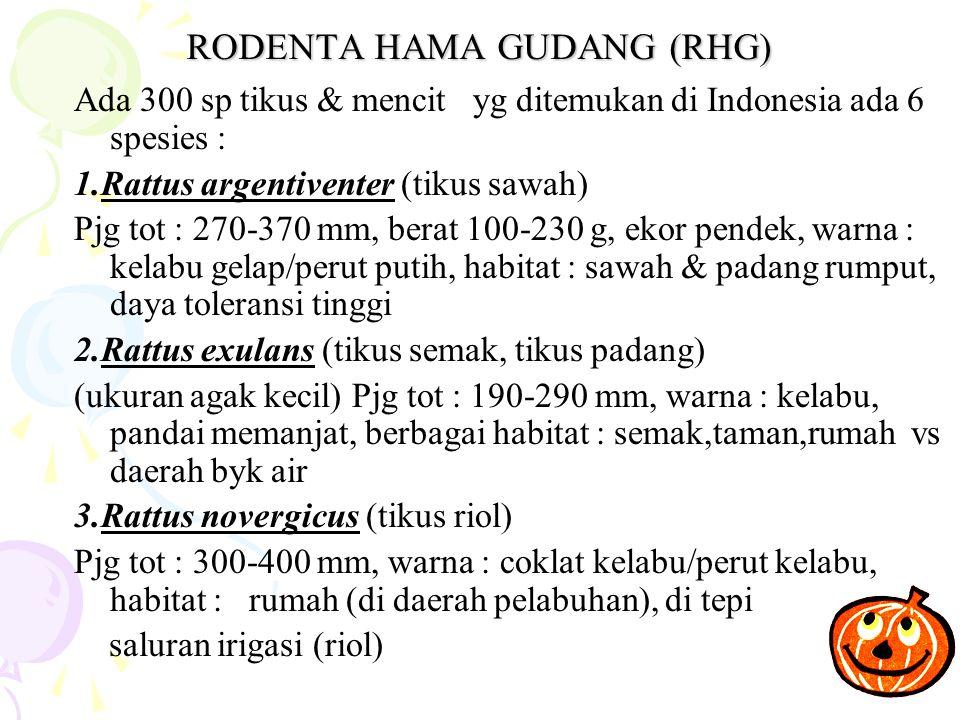 RODENTA HAMA GUDANG (RHG)