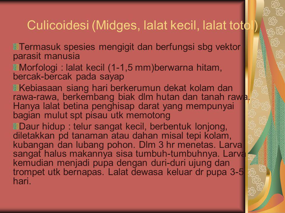 Culicoidesi (Midges, lalat kecil, lalat totol)
