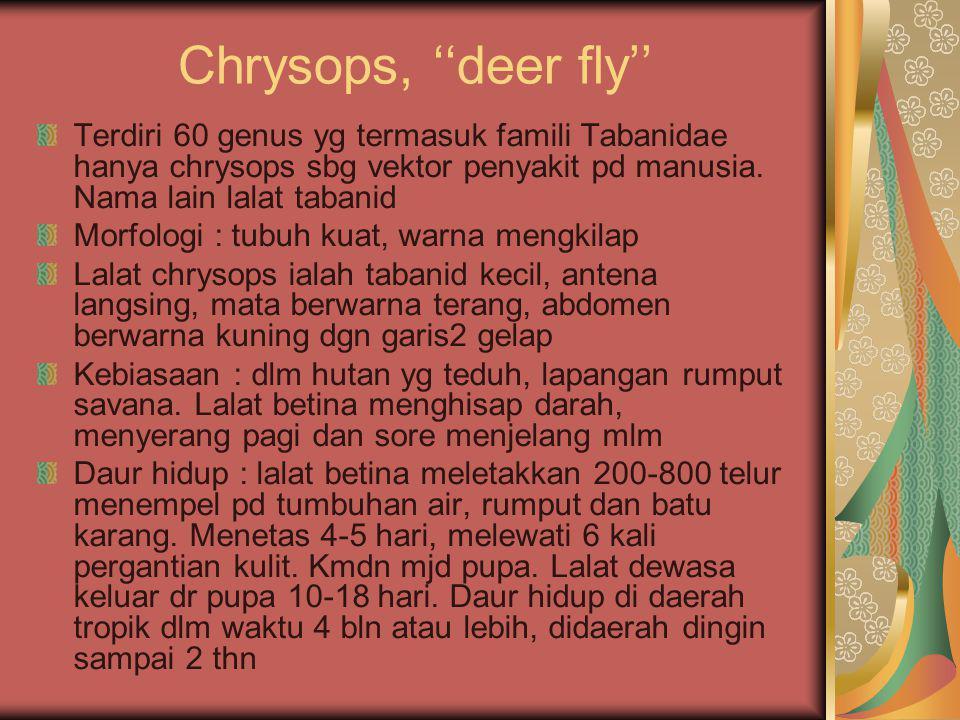 Chrysops, ''deer fly'' Terdiri 60 genus yg termasuk famili Tabanidae hanya chrysops sbg vektor penyakit pd manusia. Nama lain lalat tabanid.