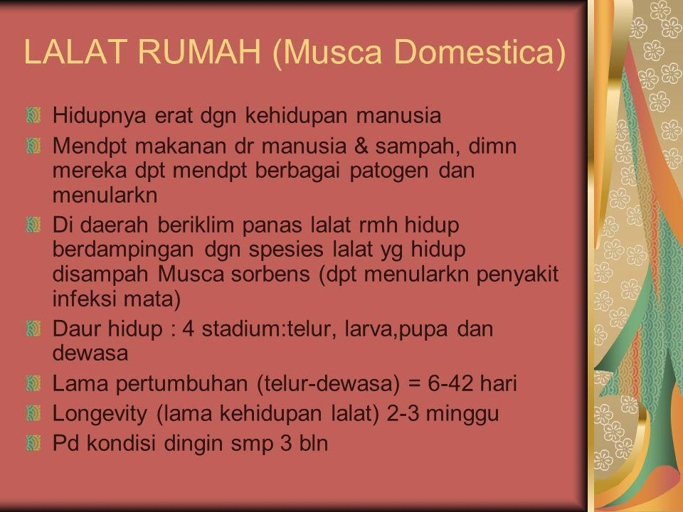 LALAT RUMAH (Musca Domestica)