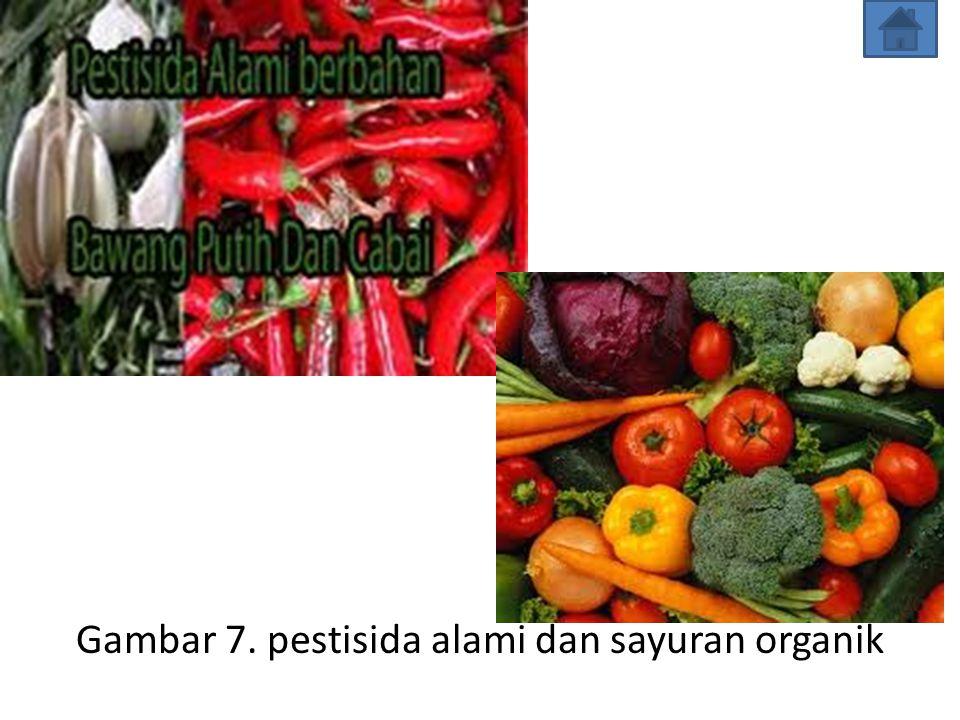 Gambar 7. pestisida alami dan sayuran organik