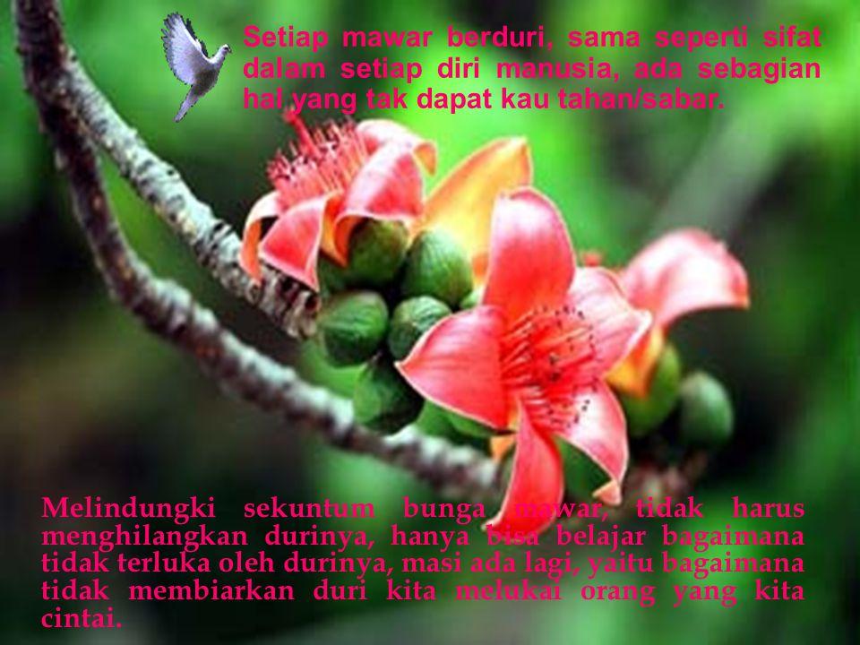 Setiap mawar berduri, sama seperti sifat dalam setiap diri manusia, ada sebagian hal yang tak dapat kau tahan/sabar.