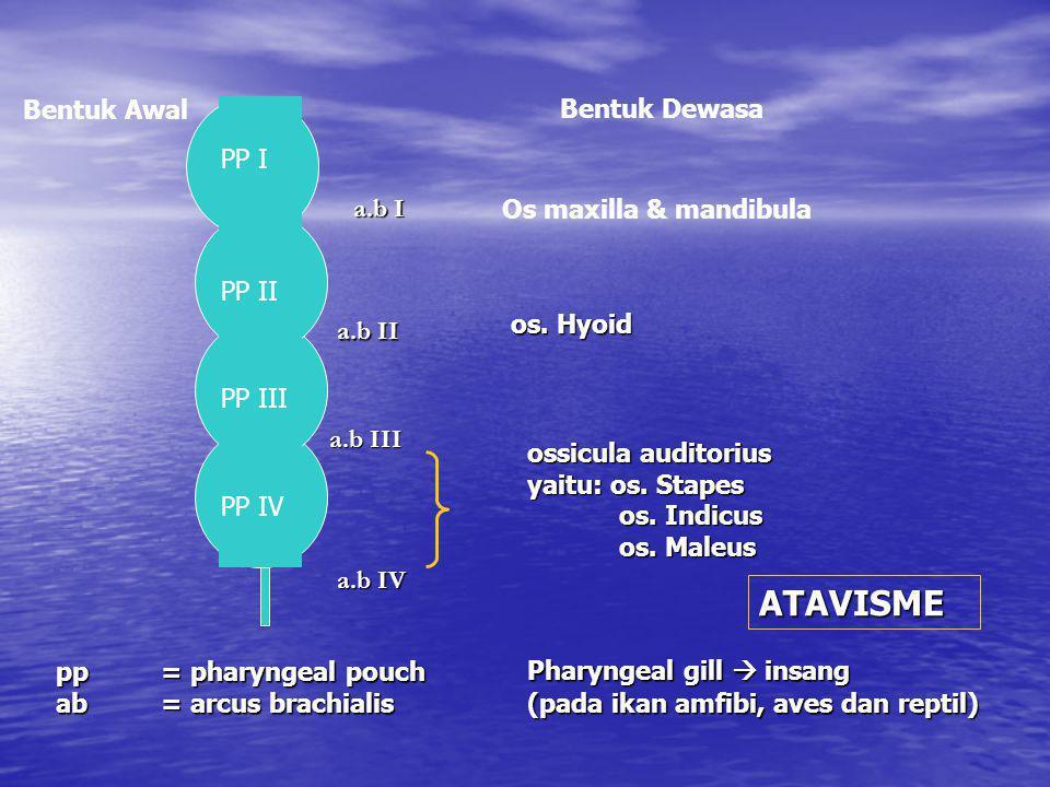 ATAVISME Bentuk Awal Bentuk Dewasa PP I a.b I Os maxilla & mandibula