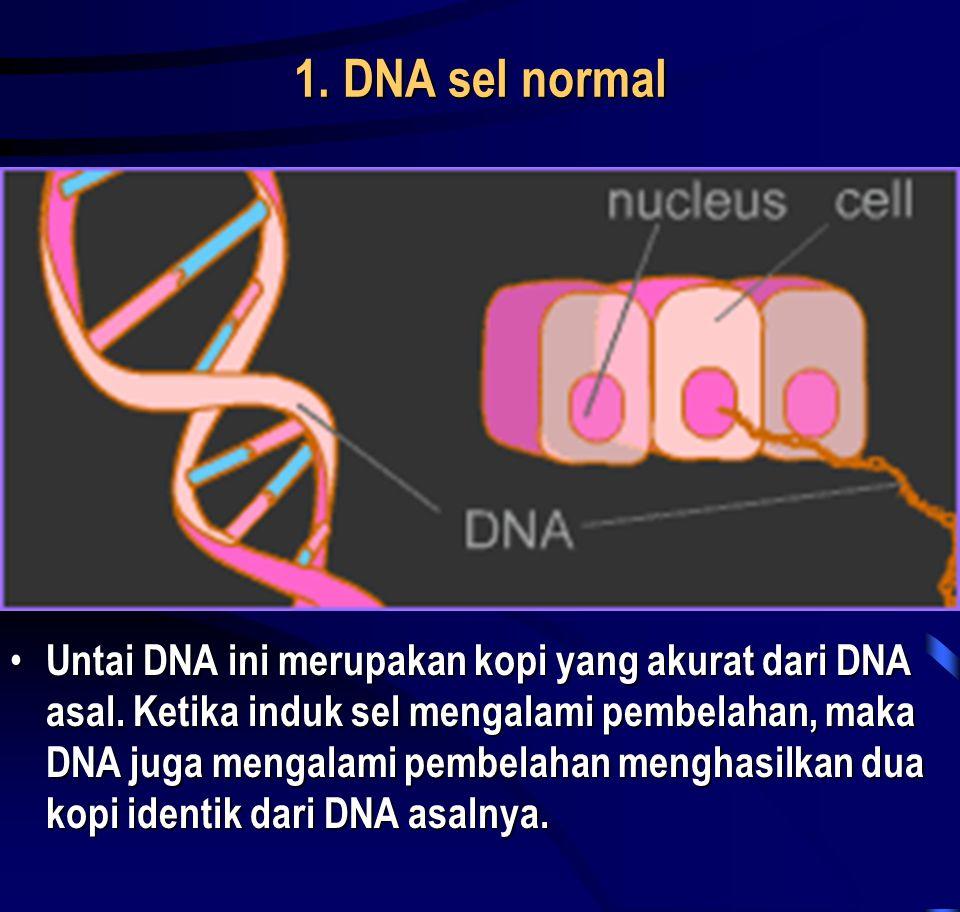 1. DNA sel normal